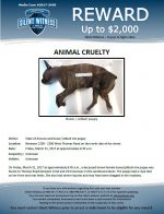 Animal Cruelty / Between 2200 – 2300 West Thomas Road on the north side of the street