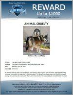 Animal Cruelty / The area of Portobello Ave and South Piedra Ave., Mesa