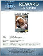 Animal Cruelty / 24250 North 7th Avenue, Phoenix