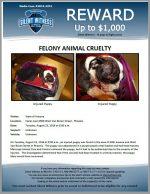 Animal Cruelty / Canal near 6900 West Van Buren Street – Phoenix