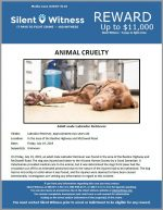 Animal Cruelty / In the area of the Beeline Highway and McDowell Road